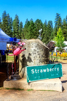 Strawberry Music Festival, Fall, 2014