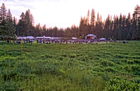 Music Meadow as seen from Hog Ranch Meadow, ​Strawberry Music Festival, Spring, 2003